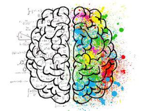 Verkaufspsychologie: Gehirn mit zwei Gehirnhälften